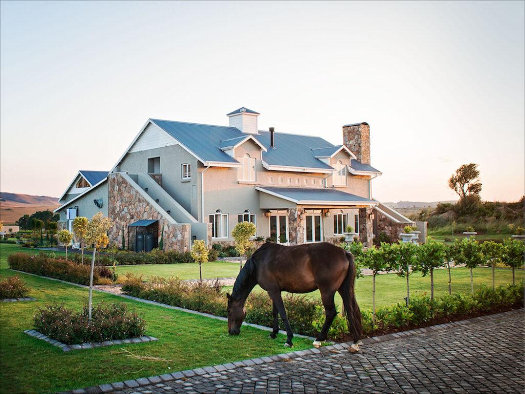 Dunkeld Country & Equestrian Estate, Equestrian Estate, horses
